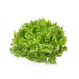 Lechuga Hidropónica Lolo Green (unidad)